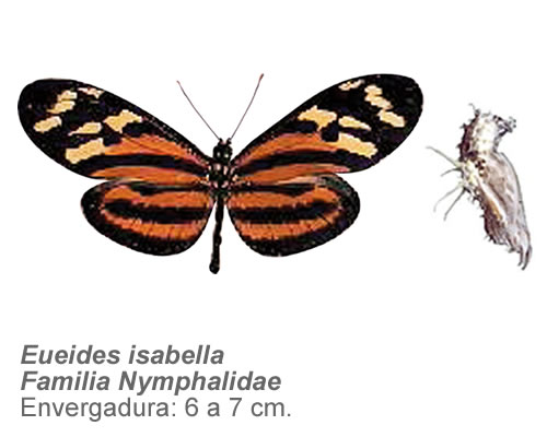 Mariposaatigrada
