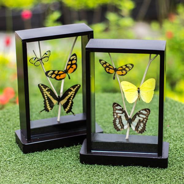 marco_madera_mariposas